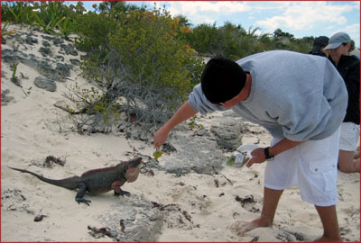"Exuma Bahamas Nicolas Cage Island Lizard - ""Mmmm, that tastes grape..."""