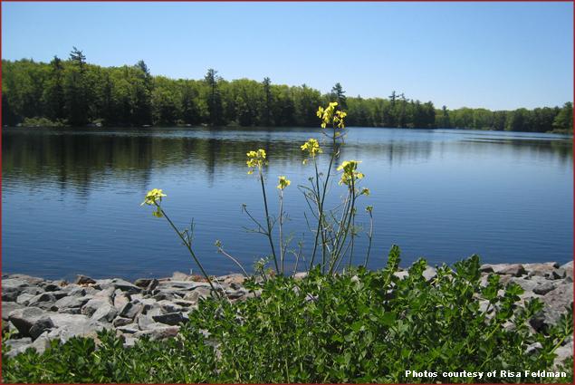 The Lake at Woodlach