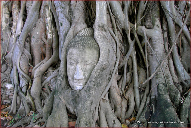 Buddha's face carved in the roots of a banyan tree