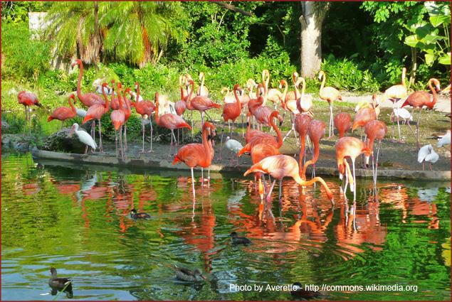Flamingos at the Miami Metro Zoo