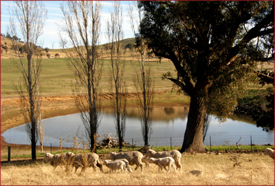 Canberra's northern suburbs very quickly turn into relaxed, rolling farmland. A drive through it is the perfect cure for the winter workweek