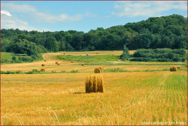 Île d'Orléans is 98% agricultural