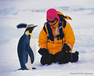 Emperor Penguin and passenger