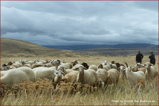 Vartan and Samvel, sheep herders