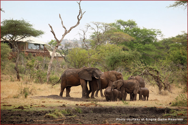 Elephants grazing at the Faru Faru Lodge at Singita Game Reserves in Tanzania
