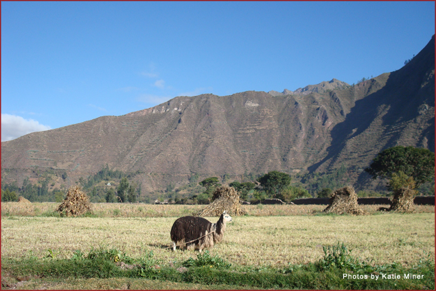 Llama with mountains