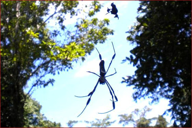 Costa Rican spider... Scary