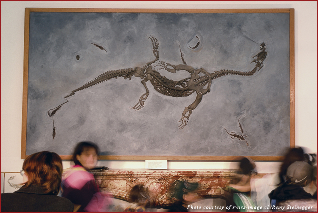 Fossil Museum in Meride at the foot of Monte San Giorgio