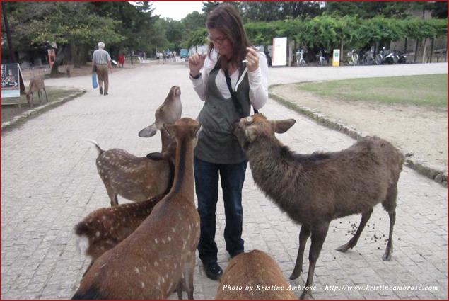 Feeding Shika Sembei to the Sika Deer in Nara