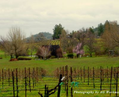 View from a tasting room in Amador Wine Region