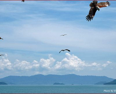 Sea eagles and the islands of Phang Nga Bay