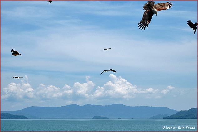 Sea eagles and the islands of Phang Nga Bay