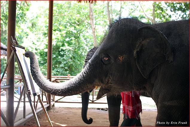 Siam Safari baby elephant show