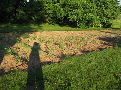 Chives Restaurant garden
