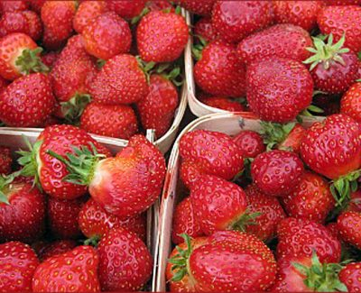 Strawberry Picking in Nova Scotia's Annapolis Valley