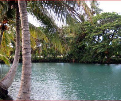 Beautiful sea-turtle-filled lagoon in Samoa