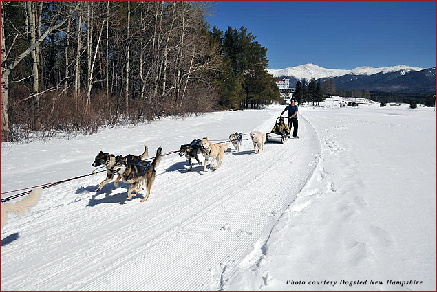 For a Valentine's Day adventure, go dogsledding in the mountains of New Hampshire