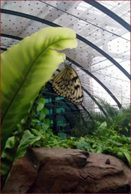 The amazing butterfly sanctuary at Changi airport