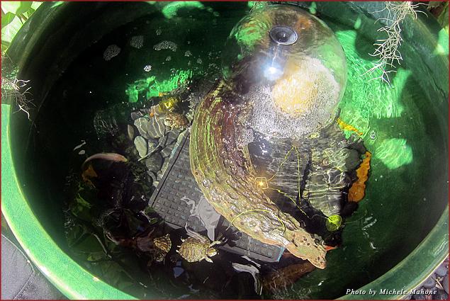 Turtles call the Angler's home