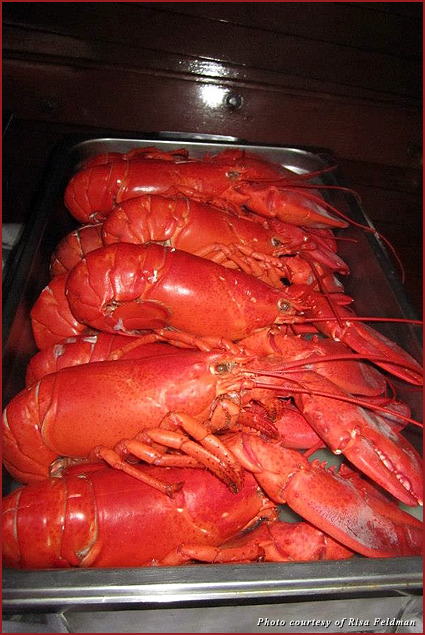 The lobsters could not have tasted any better!