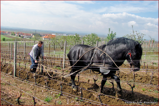 The rich soils are still tended in traditional ways by many farmers