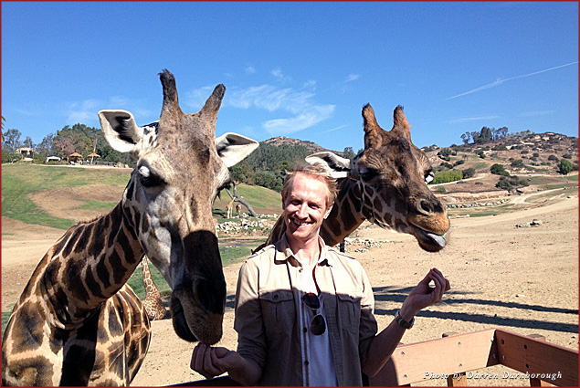 Feeding giraffes at the safari park