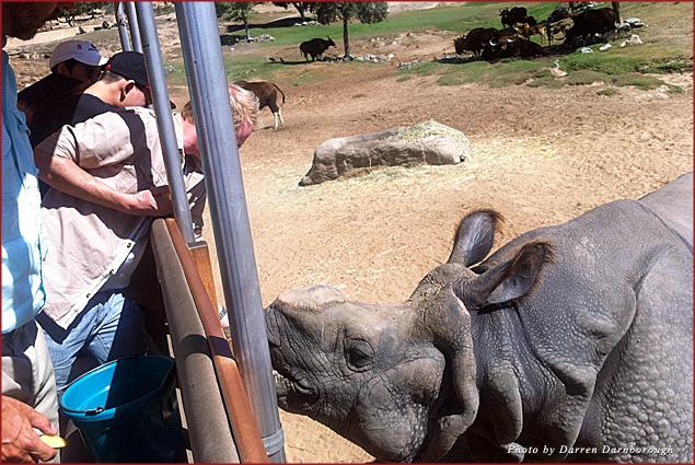 A rhino says hello