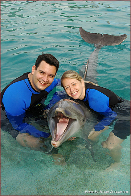 Have a Dolphin Odyssey experience at the Miami Seaquarium