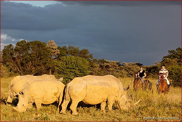 Trek across Limpopo, South Africa on horseback