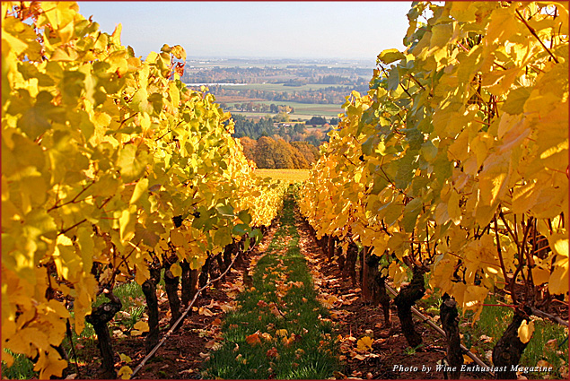 A view of vineyards in Willamette Valley, Oregon