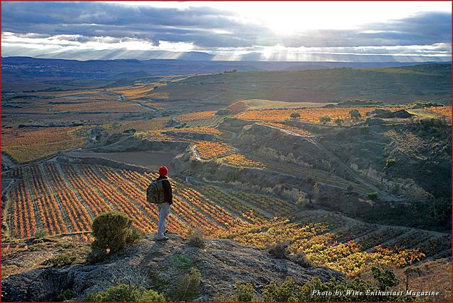Vineyards in Rioja, Spain