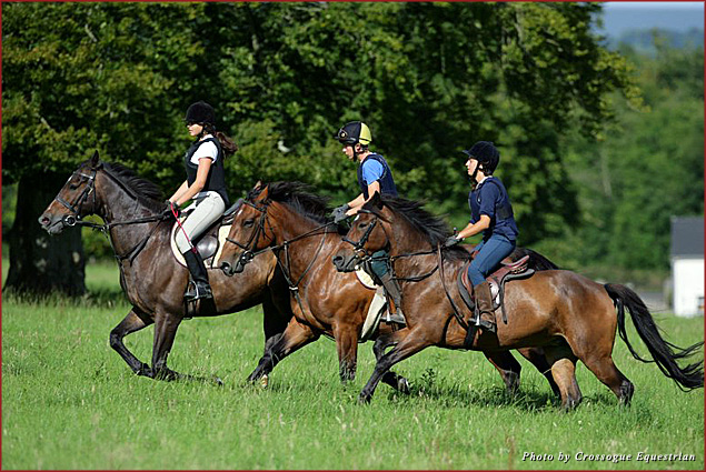 Crossogue is a place of freedom and bliss for horse lovers of all ages