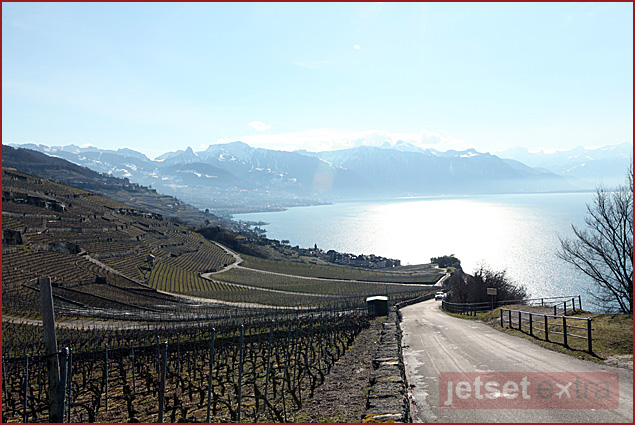 Vineyards at UNESCO World Heritage Site Lavaux, Switzerland