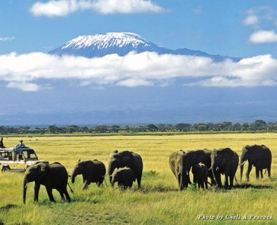 Elephant herds are on view at the base of Mount Kilimanjaro