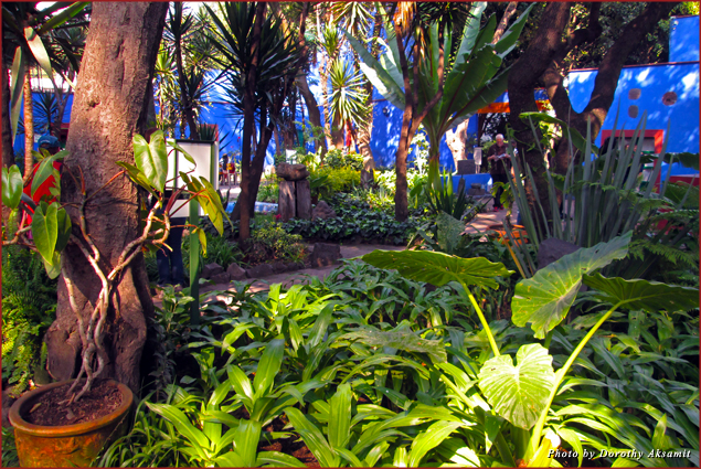 Frida's lush garden enclosed by cobalt blue walls