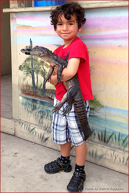 My son, Xander, holding a baby alligator