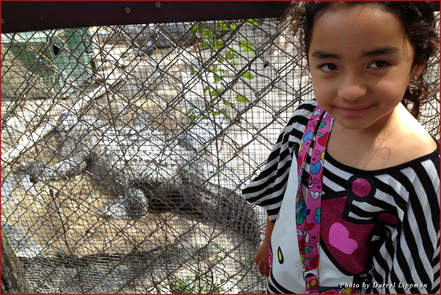 My daughter Athena stands near the alligator cage
