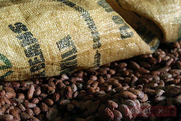 Cocoa Beans fermenting as part of the cocoa production process