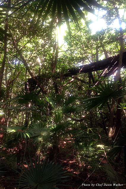 Nature walk at Xanadu