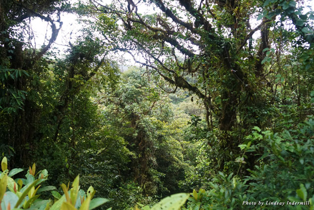 The canopy tour of Selvatura Park is not to be missed