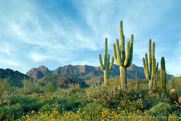 Scottsdale's McDowell Mountains