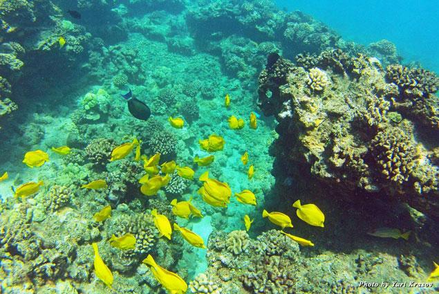 School of fish in marine preserve