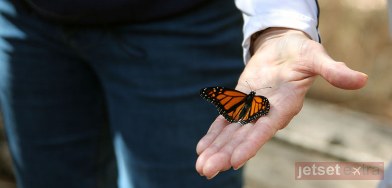 A docent at the Goleta Monarch Butterfly Preserve holds a young butterfly
