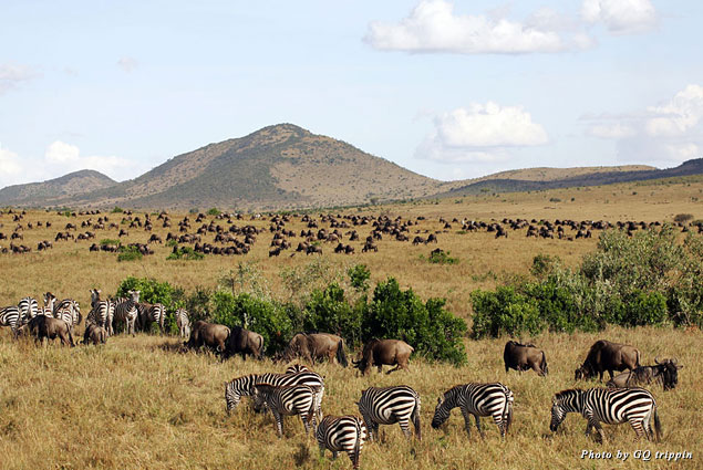 Masai Mara National Reserve in Africa