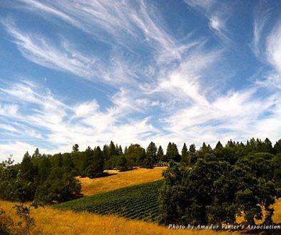 Amador County's wine vista