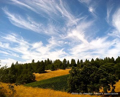 Amador County's wine vista