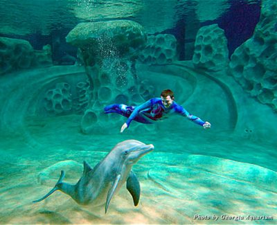 Guests have the opportunity to view dolphins and their naturally playful behaviors in the AT&T Dolphin Tales entrance lobby