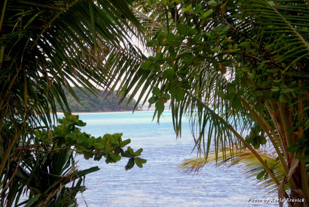 Looking through the trees to the clear blue water