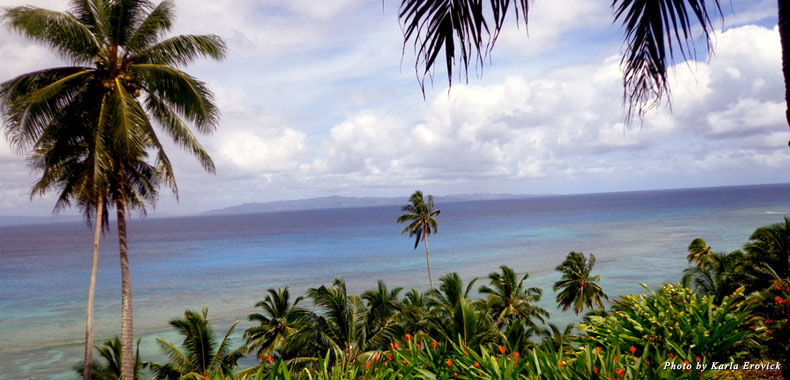 A view of the water, framed by palm trees