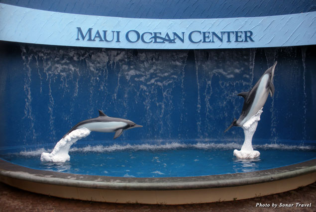 At the Maui Ocean center you can view sharks, fish, and sea turtles
